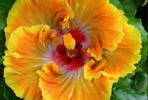 Online Flower Delivery In Shimla / Send flowers to shimla, flower delivery in shimla, best online florist in shimla, shimla online florist, cakes delivery in shimla, same day flower delivery in shimla, florist in shimla. http://www.onlineflowersgift.com/send-flowers/shimla