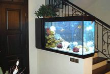 America Aquaria / Check out the beautiful fish and custom aquariums designed by our partner brand, America Aquaria. Visit www.americaaquaria.com to see more! / by America In-Home