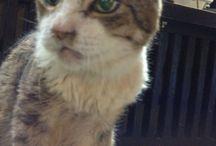 ティティ / 北温泉の看板猫
