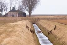 Gem. Oldambt / Toerisme & recreatie.  Revital - Uit in Nederland.  www.revital.nl