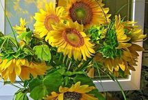 SUNFLOWERS (SONNEBLOMME) / My love of sunflowers and the colour yellow.  Yellow is for warmth and sunshine. Yellow is happiness.