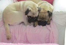 My Pugs / by Fibermania
