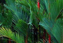 Palmer / Olika sorters palmer från olika världsdelar