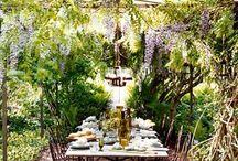 Mi jardin  / Garden / by Vivian Fundora-Pastoriza