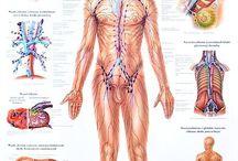 anatoomyy