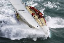 Sea life & Yacht