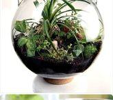 florarium minigarden moss sammal