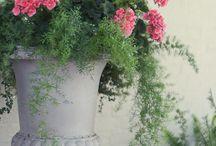 Цветы в дом