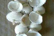 Shell n Beach decor.