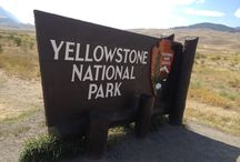 Yellowstone and surrounding States Wolves / Yellowstone area wolves and wolfwatching, news and info