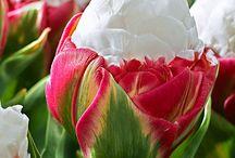 Power of beautiful flower