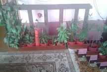 Moje květinky