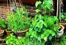 Garden & Going Green! / by Mandy Harkema