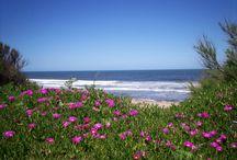 Arenas Verdes, Las Playas de Loberia / Elegí vacaciones en el interior, elegí vacaciones tranquilas, elegí aromas del pueblo, elegí Loberia