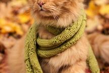 otoño / otoño