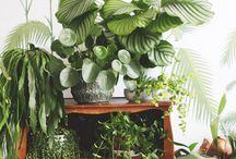 groene oase intratuin