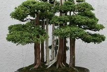 Bonsai / by Dawn Tucker