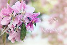 Flowers / Hello Spring, Spring, Flowers, Maya Photo