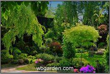 kwiaty,ogrody,skalniaki