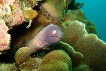 Duiken met BB Divers op het ongerepte Koh Kood