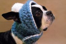 Knitted hats for dogs / No dog's wardrobe is complete without a knitted hat - especially in this weather. *shivers* (Jeff-Dog's taken one look and run off. heh)