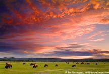 World Travel / by Leonie Dawson :: LeonieDawson.com