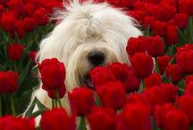 Red & White World