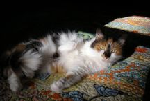 Calicos & Quilts