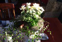 My prettiest flowers