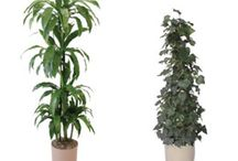 Houseplants / by LAWN-N-ORDER