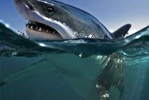 sea beasts