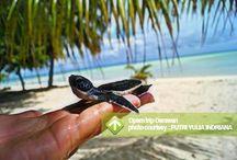 Open Trip Derawan [operator : Putri Yulia Indriana] / Open Trip Derawan 12 - 15 October 2013 Link : http://triptr.us/uI