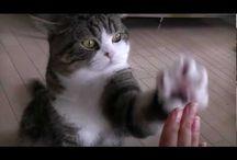 Videos I Like / by Christina Florente