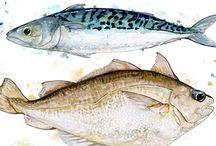 Finny Fish / All things fishy