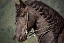 Horse / Clothing / Fashions