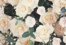 Roses / by Pat Ploegsma