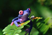 grenouille / Une grenouille est un être vivant d'un beauté magnifique la preuve