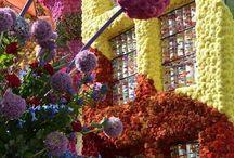 Flower Corso Eelde. NL