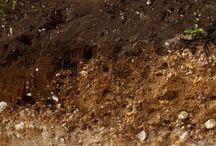 Bodem/Soil