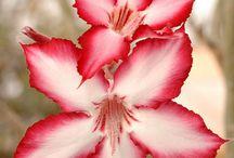 DOĞA ( Çiçekler, Ağaçlar,...)