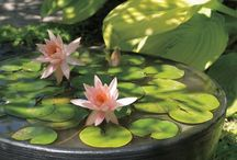 vand blomster i haven