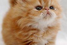 Gatos <3