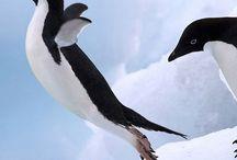 Pingüino volador
