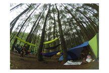 Hutan Pinus Loji - Cijeruk