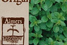 Herbs for sale @ EcoSuperior / We sell a variety of herbs from Aimers organics, Hawthorn Farm, and Heritage Harvest Seed. Available at EcoSuperior, 562 Red River Road.