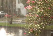 Summer rain ☔️