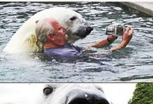Cute Animals / My favorite animals are penguins, otters, wombats, and narwhals...in that order.
