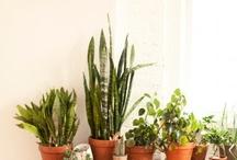 Växtbonanza