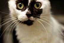 CATS / i wish i could give a forever home to every cat on my planet