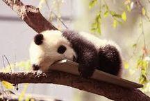 .cute.